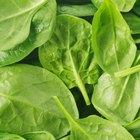 ¿Cuáles son los beneficios del quelato de magnesio?