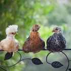 Bird Listening Devices