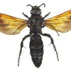 Picaduras de insectos que dejan aguijones