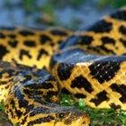 ¿Que tipos de animales se encuentran en los ecosistemas de los ríos?