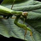 Especies de insectos en la selva