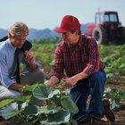 Cómo iniciar un negocio de agricultura exitoso