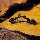 Las diferencias entre animales e insectos