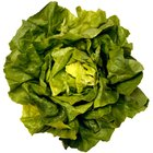 Nutritional Benefits of Butter Leaf Lettuce