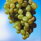 Grants for Grapes