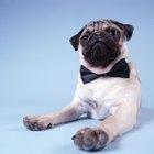 Cómo hacer corbatas de moño para perros