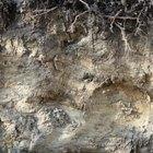 ¿Cuánto tarda en formarse el suelo aproximadamente?