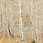 Lista de factores bióticos y abióticos en los ecosistemas forestales