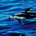 ¿Qué tipos de animales estudia la biología marina?