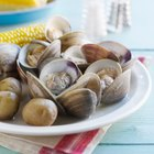 Types of Edible Clams