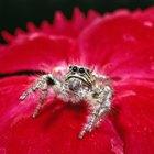 Piquetes de insectos y bichos que se hinchan