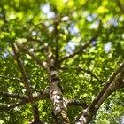Estructuras que captan la energía lumínica y realizan fotosíntesis