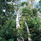¿Qué plantas crecen en el bosque tropical?