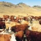 Regalos para un ranchero