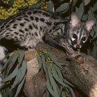 Animales en el bosque de Nigeria