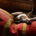 Alimentos para gatos que aportan hierro