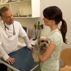 Cómo saber si tu perro tiene parásitos en la piel