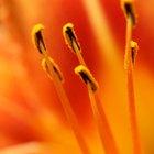 Partes internas de una flor