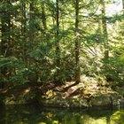 Ventajas y desventajas de los ambientes naturales