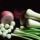 ¿Pueden los diabéticos consumir cebollas?