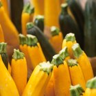 How to Dehydrate Summer Squash