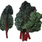 How to Cook Swiss Chard Italian Style