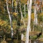 Adaptación de las plantas y animales en los pantanos