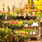 Flower Shop Ideas
