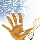 The Disadvantages of Fingerprint Analysis