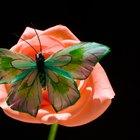 La diferencia entre la polinización por viento y por insectos