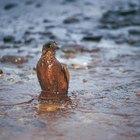 Microbios usados para limpiar derrames de petróleo