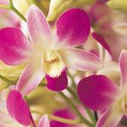How to Start Your Own Orchid Business