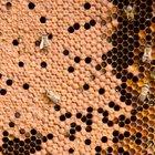 Cómo extraer miel de un panal natural