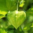 Una lista de importantes adaptaciones de las plantas terrestres para sobrevivir