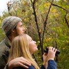 Organismos que viven en bosques de hoja caduca