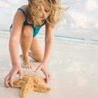 Cómo conservar una estrella de mar