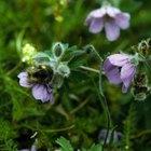 Tipos de insectos polinizadores