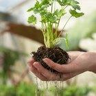 ¿Por qué las plantas dependen de las bacterias en la tierra?