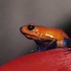Tipos de ranas en la selva tropical latinoamericana