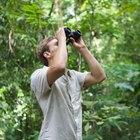 Animales y plantas que son nativas de Colombia
