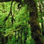 Características especiales de los biomas de selva tropical