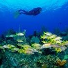 Descubrimientos que logró Jacques Cousteau