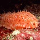 ¿Cuáles son los descomponedores en el ecosistema submarino?