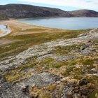 Factores bióticos y abióticos de la tundra