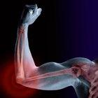 Efecto de la acetilcolina en los músculos