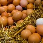 Cómo envolver un huevo para que no se rompa