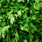 Fresh Parsley Substitutes