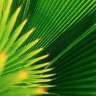 ¿Qué pigmentos en las plantas contribuyen a la fotosíntesis?