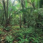 Características del suelo de la selva