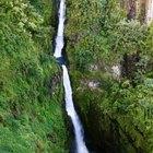 10 datos interesantes sobre la selva tropical